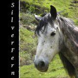 silverfern